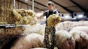 pigsfarm2